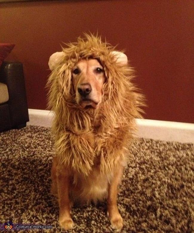 Kostimi za pse1 Spremni za maskenbal: Najluđi kostimi za pse