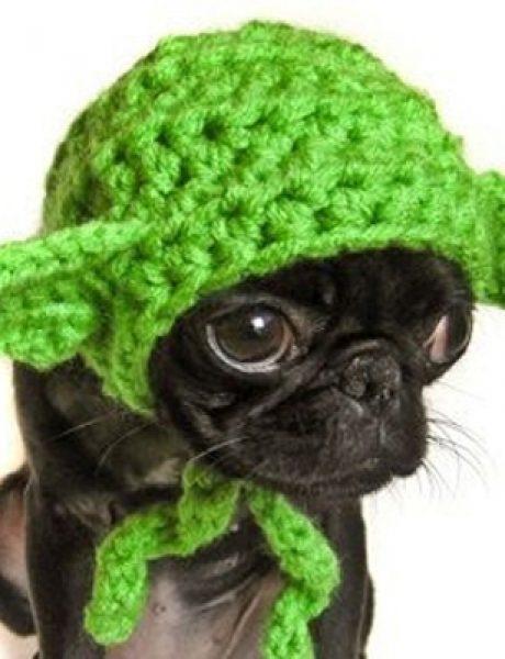 Spremni za maskenbal: Najluđi kostimi za pse