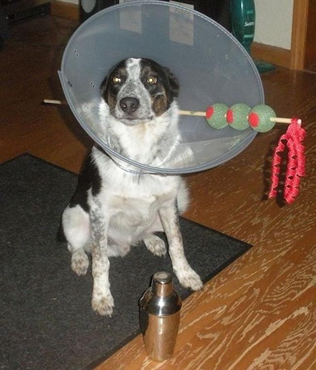 Kostimi za pse6 Spremni za maskenbal: Najluđi kostimi za pse