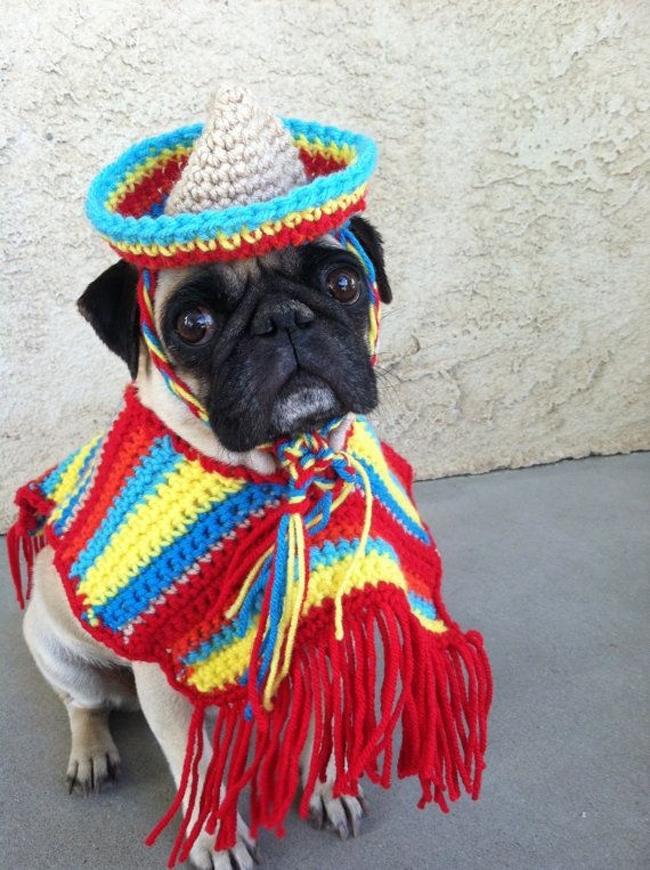 Kostimi za pse8 Spremni za maskenbal: Najluđi kostimi za pse
