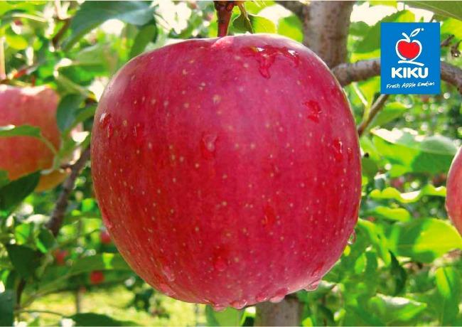 Kiku Agrar2 Šta su Kiku jabuke i šta ih čini tako posebnim?