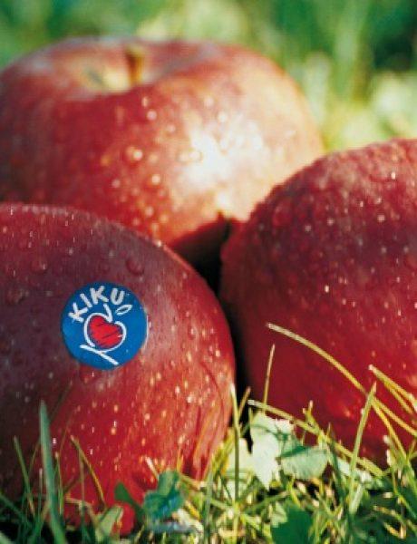Šta su Kiku jabuke i šta ih čini tako posebnim?