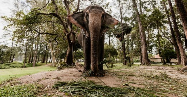 Thailand Tajland: Hedonistički raj, zemlja osmeha i večne slobode