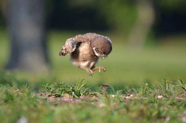 cuda prirode neverovatne fotografije sova 1 Čuda prirode: Neverovatne fotografije sova