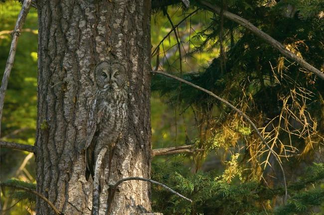 cuda prirode neverovatne fotografije sova 2 Čuda prirode: Neverovatne fotografije sova