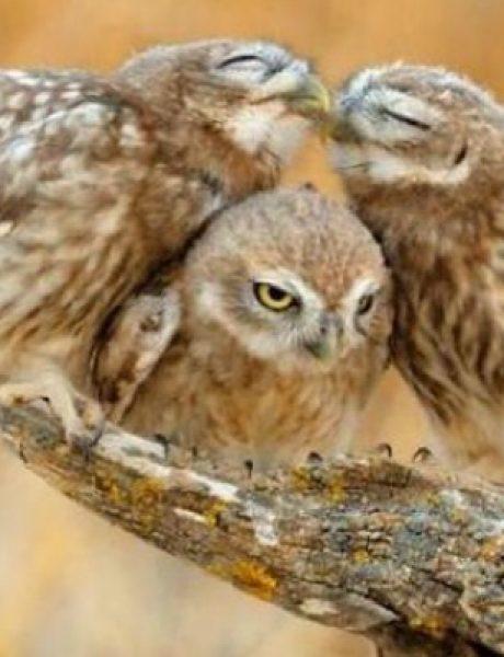 Čuda prirode: Neverovatne fotografije sova