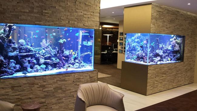 enterijer najlepsi sobni akvarijumi na svetu 3 Enterijer: Najlepši sobni akvarijumi na svetu