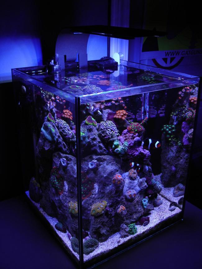 enterijer najlepsi sobni akvarijumi na svetu 4 Enterijer: Najlepši sobni akvarijumi na svetu