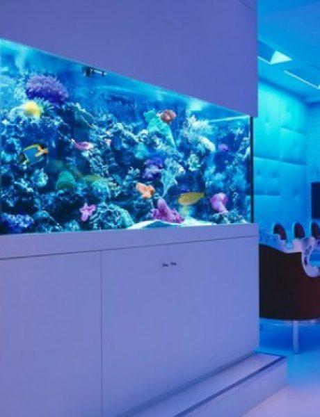 Enterijer: Najlepši sobni akvarijumi na svetu