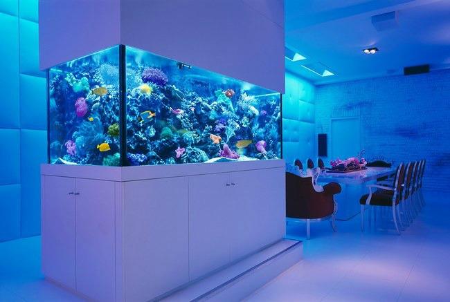 enterijer najlepsi sobni akvarijumi na svetu 7 Enterijer: Najlepši sobni akvarijumi na svetu