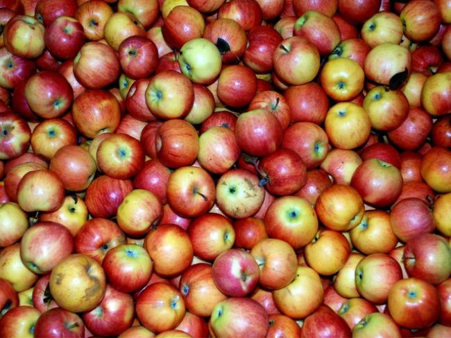jabuke Plodovi jeseni donose zdravlje
