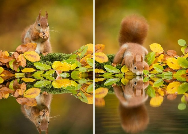 jesen i zivotinje 21 Najslađe životinje koje uživaju u čarima jeseni