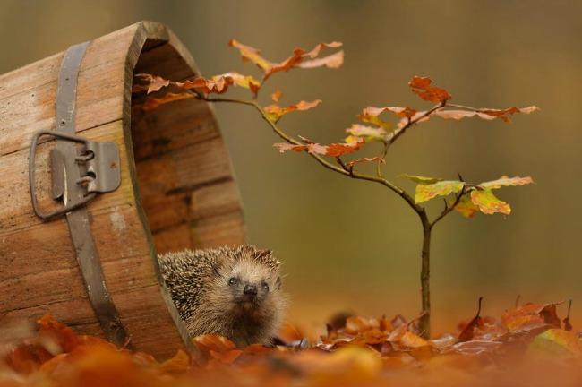 jesen i zivotinje 3 Najslađe životinje koje uživaju u čarima jeseni