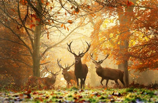 jesen i zivotinje 4 Najslađe životinje koje uživaju u čarima jeseni