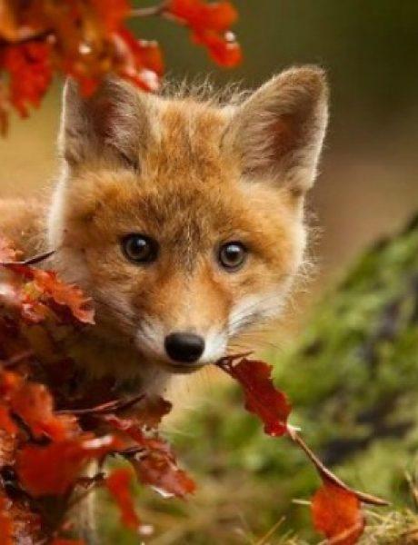 Najslađe životinje koje uživaju u čarima jeseni