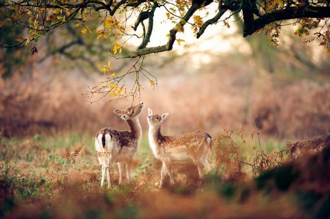 jesen i zivotinje 6 Najslađe životinje koje uživaju u čarima jeseni