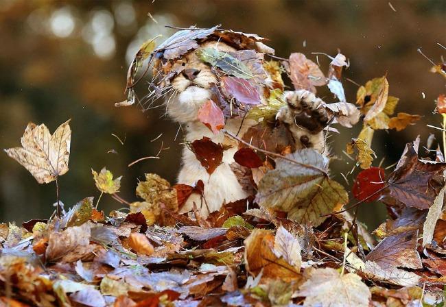 jesen i zivotinje 7 Najslađe životinje koje uživaju u čarima jeseni