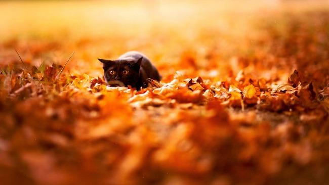 jesen i zivotinje 8 Najslađe životinje koje uživaju u čarima jeseni