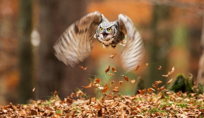 jesen i zivotinje 9 Najslađe životinje koje uživaju u čarima jeseni