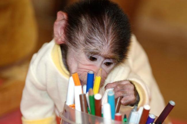 majmun44 Majmun koji se ponaša kao beba