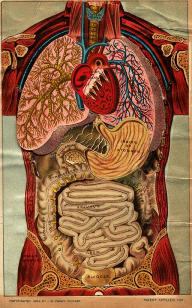 10 neverovatnih cinjenica o ljudskom telu 1 10 neverovatnih činjenica o ljudskom telu