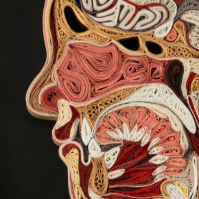 10 neverovatnih cinjenica o ljudskom telu 2 10 neverovatnih činjenica o ljudskom telu