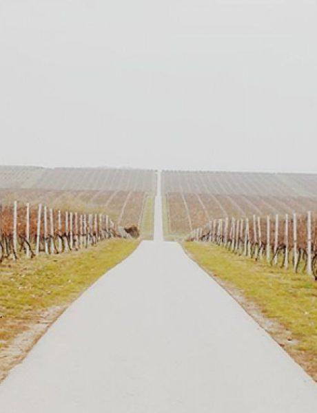 Instagram izveštaj: Vina Belje