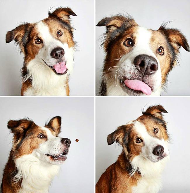 slatki psi 1 Slatke fotografije pasa kao put ka udomljavanju