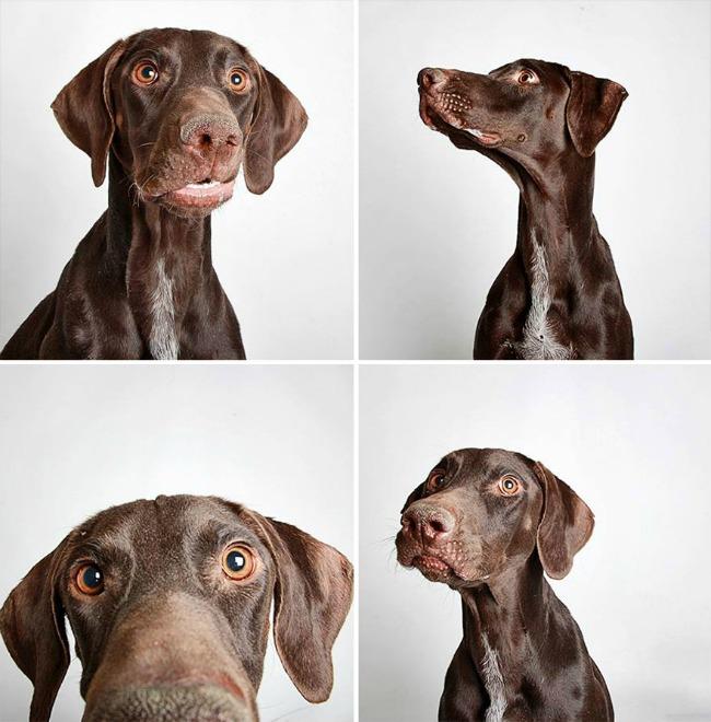 slatki psi 2 Slatke fotografije pasa kao put ka udomljavanju