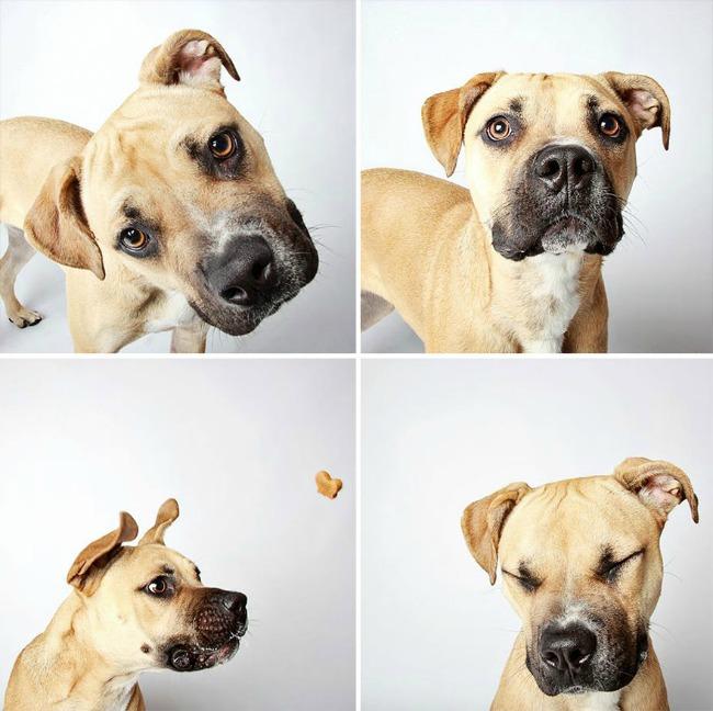 slatki psi 41 Slatke fotografije pasa kao put ka udomljavanju