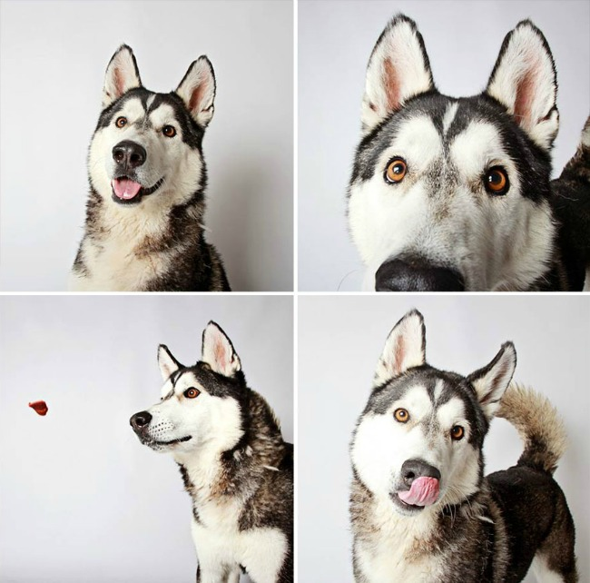 slatki psi 5 Slatke fotografije pasa kao put ka udomljavanju