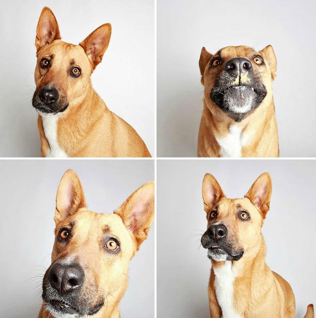 slatki psi 8 Slatke fotografije pasa kao put ka udomljavanju