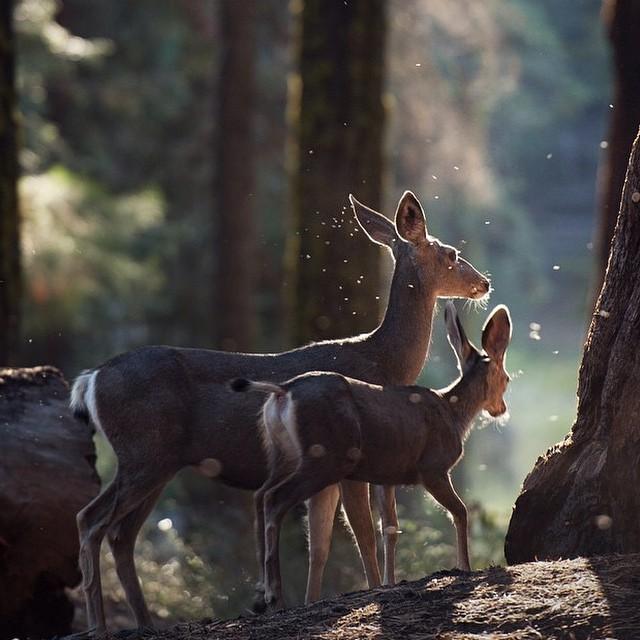 srne Nedeljni Instagram leksikon: Visuals of Life