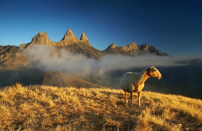 ovca na alpima Planinarenje kao potraga ka lepotama sveta   Karol Nienartovic
