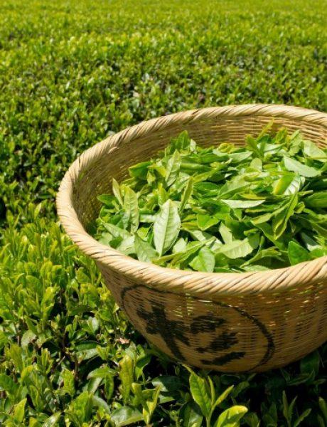 Iznenađenje: Efekti zelenog čaja na lepotu
