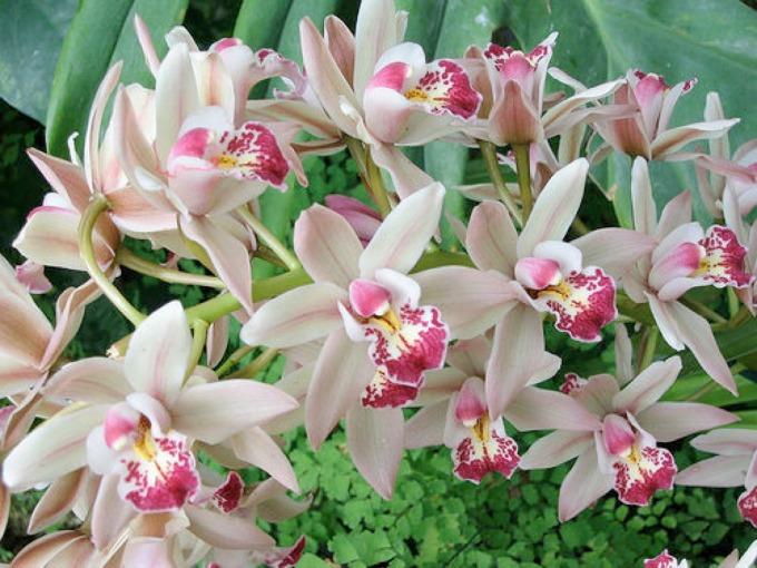 orhideja Dan žena prilika za uživanje u Idei