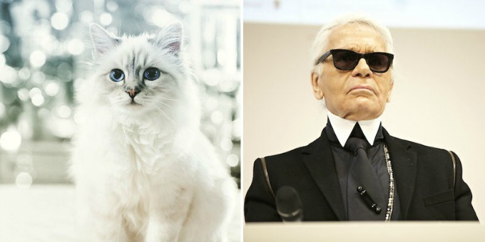 macka karla lagerfelda 1 Koliko zarađuje mačka Karla Lagerfelda?