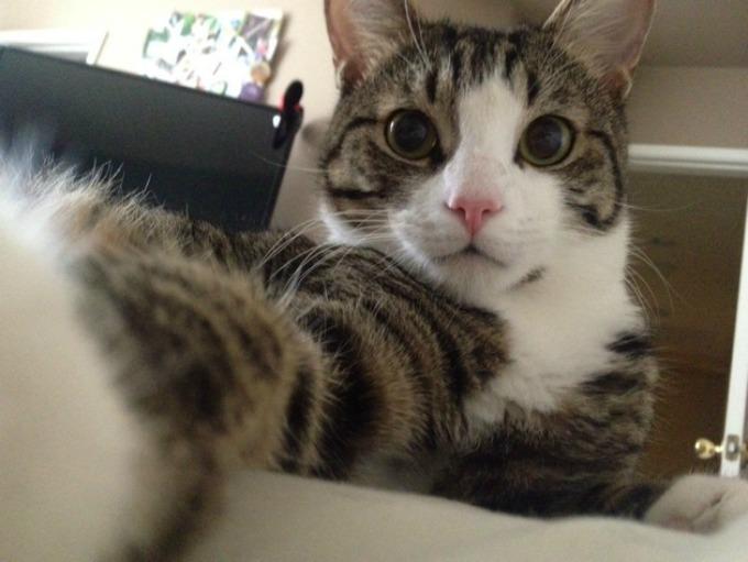 macke 1 Kad bi mačke pravile selfi