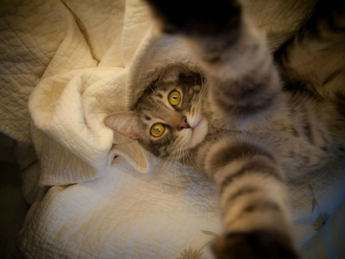 macke 3 Kad bi mačke pravile selfi
