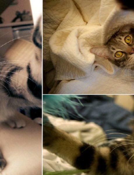 Kad bi mačke pravile selfi