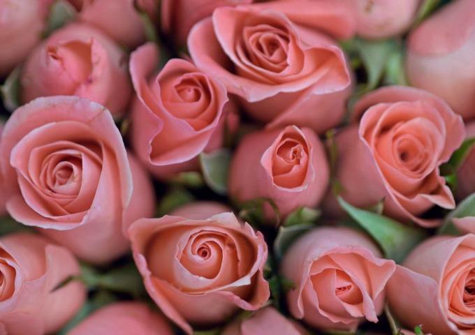 cvece 1 Šta tvoj omiljeni cvet govori o tebi?