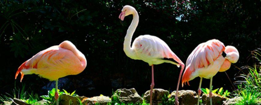 Flamingosi kao detalj u dekoraciji prostora