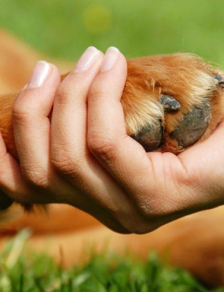 Verovali ili ne: Psi mogu da otkriju rak