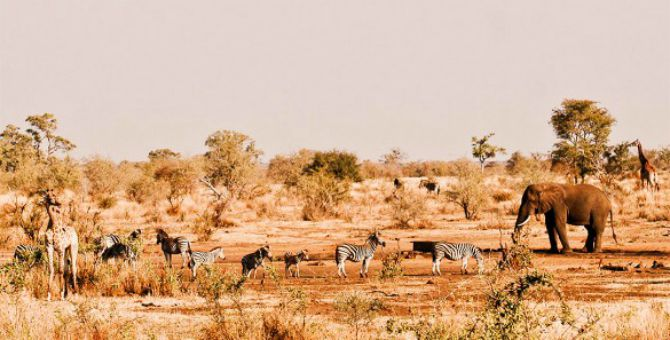 Nacionalni Park Kruger Južna Afrika Najlepši nacionalni parkovi na svetu