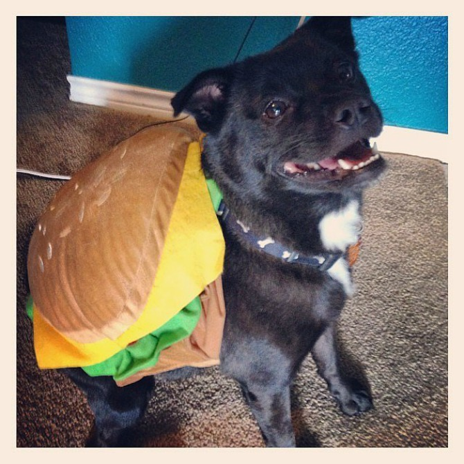 cizburger kostim za psa Interesantni kostimi za psa za Noć veštica