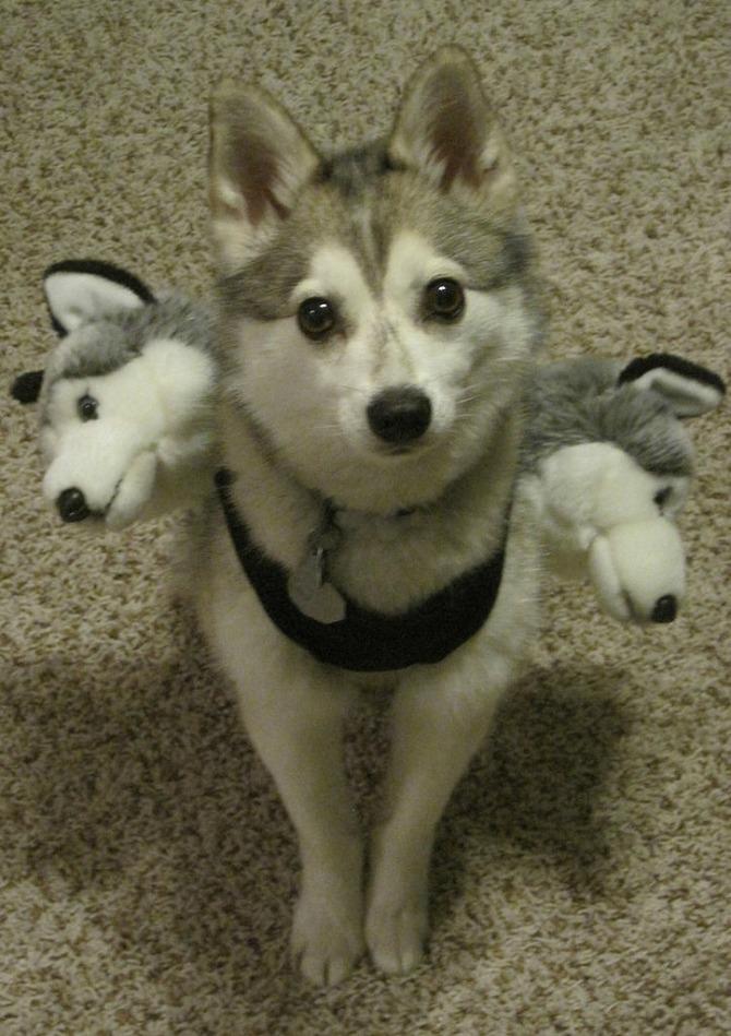 kostim pas1 Interesantni kostimi za psa za Noć veštica