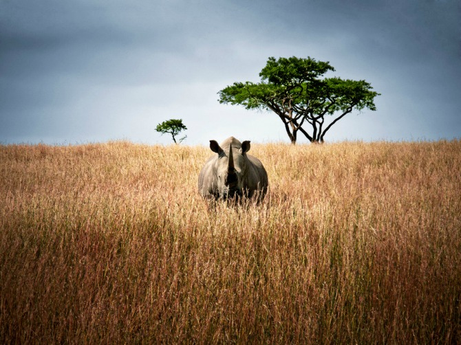 53ee4e4287b7eeed6a7a32d4 large 4 3 rhino south africa 12 mesta koja MORATE posetiti pre nego što napunite 30