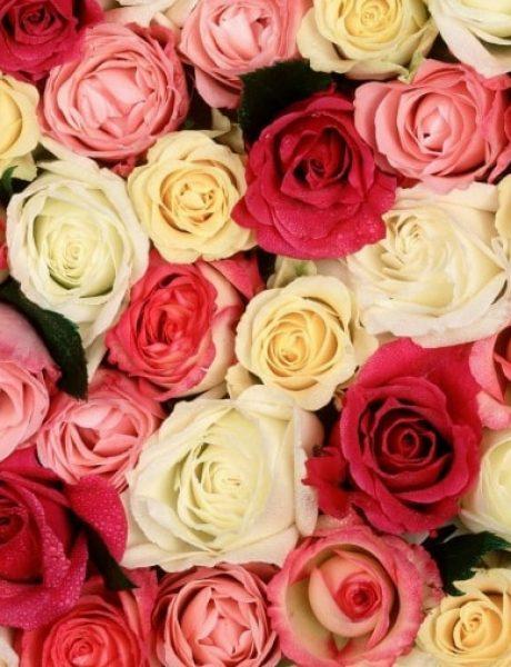 Šta tvoja OMILJENA boja ruže govori o tebi