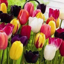 преузимање1 Kviz: Koji model farmerki treba da NOSIŠ ovog proleća?