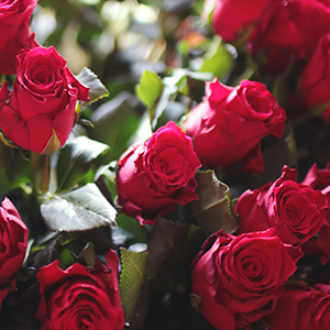 Roses Kviz: Koji model farmerki treba da NOSIŠ ovog proleća?